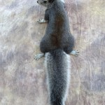 abertsquirrel2