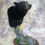 Idaho bear pedestal mount