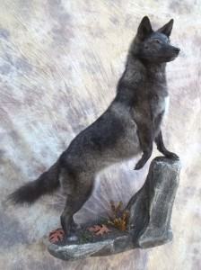 blackcoyote