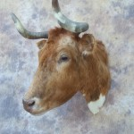 longhorn cow taxidermy mount