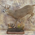 lifesize leaping whitetail deer mount