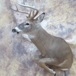 leaping whitetail deer mount