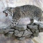 snarlingbobcat