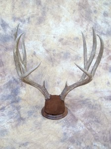 tableantlermount