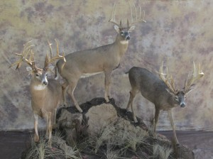 whitetailsshop1
