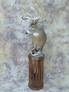 white tail deer full pedestal mount