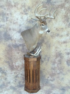ernie big kansas bow killed whitetail taxidermy pedestal