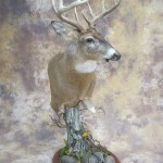 kansas whitetail deer table top pedestal mount