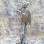bowkilled big kansas whitetail deer pedestal mount