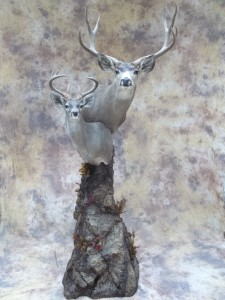 mexico muledeer and couse deer double pedestal taxidermy