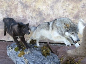 wolves1