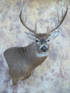 whitetail deer semisneak wall pedestal