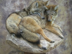 coyote pair mount